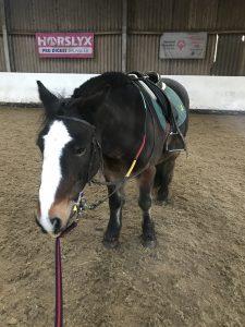 RDA Pony
