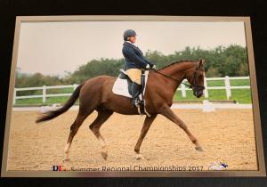 Alison Kenward Dressage Rider