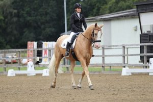 Palomino dressage pony and rider