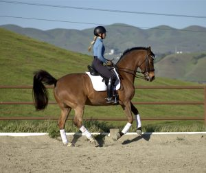 Annie Phillips riding at the Arriba Vista Ranch