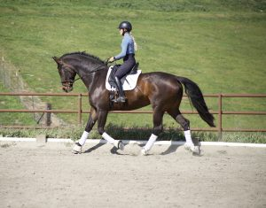 Image of Annie Phillips schooling Nora her horse