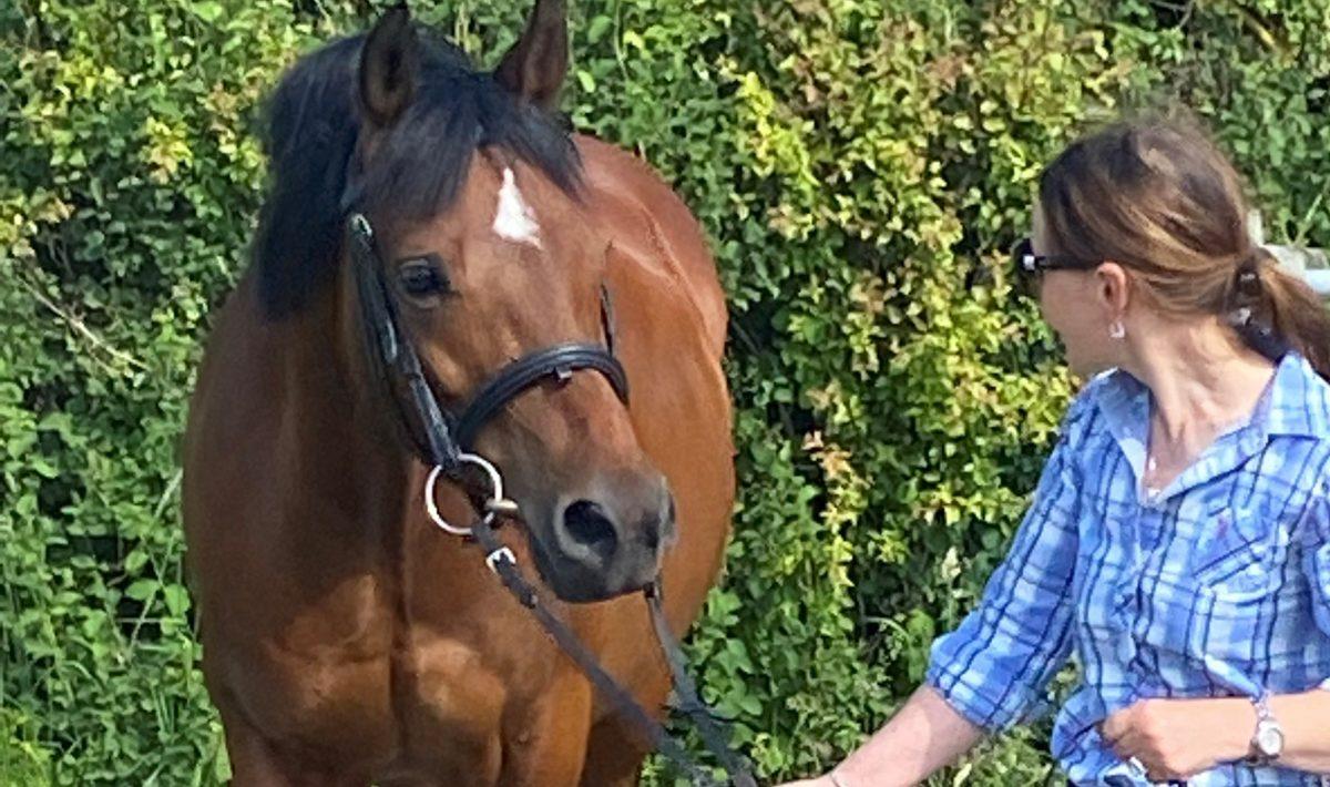 Riley the wonder pony