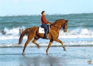 Catherine Haddad Staller and Maximus on the beach