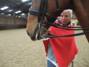 Sue Gilliatt horse bitting advice